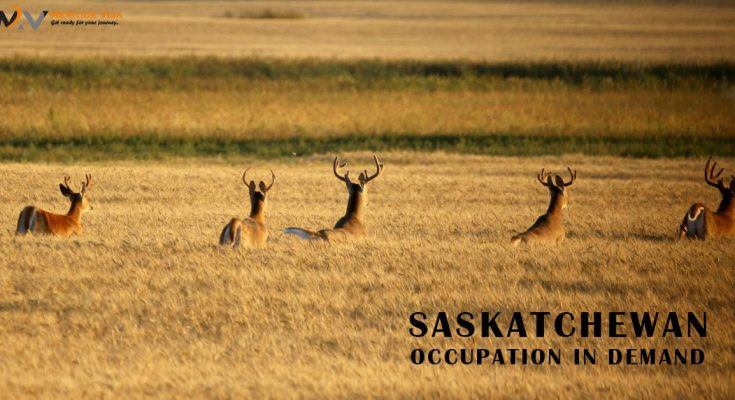 What are the Occupations in Demand in the Saskatchewan Region